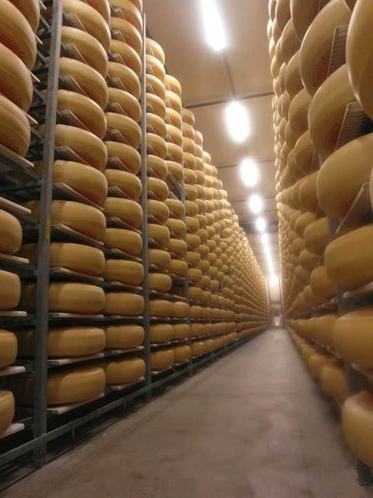 スイスチーズは濃厚で力強い味が特徴で値段も高価。
